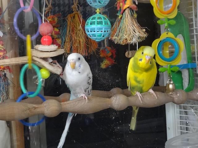 Kaylee Bird Food Review