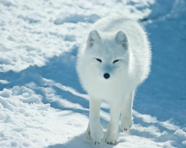 Arctic Fox Travel Trailer For Sale