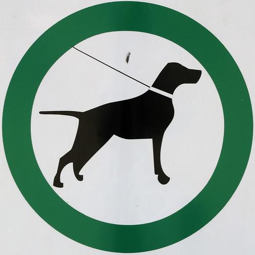 Dogs Allowed In Leisureville Boynton Beach Florida