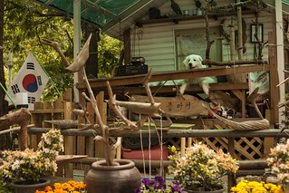 Gwanaksan Approach Dog on Porch