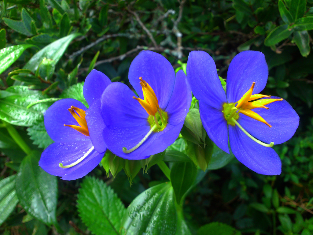 Binara Flowers Endemic to Sri Lanka udana jeewantha
