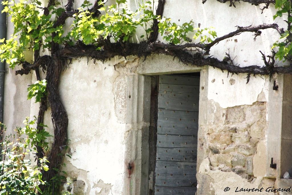 Photo d 39 une treille de vigne italia sur une vieille maison flickr - Acheter pied de vigne ...