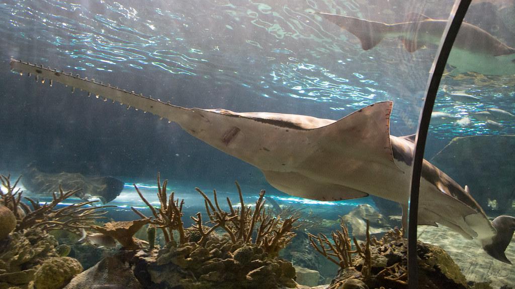 Image Result For Gatlinburg Aquarium