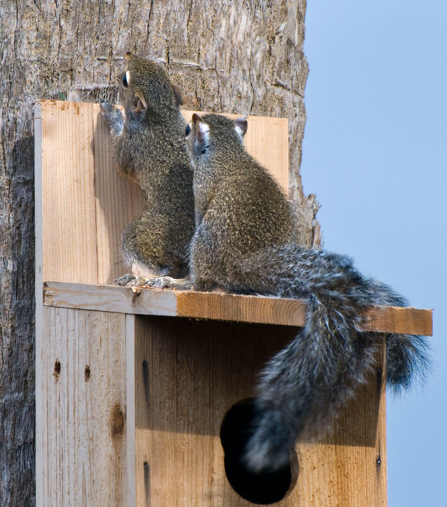 Nutty Squirrel Porno ok spread 'em i know what you're holdin', and i want th