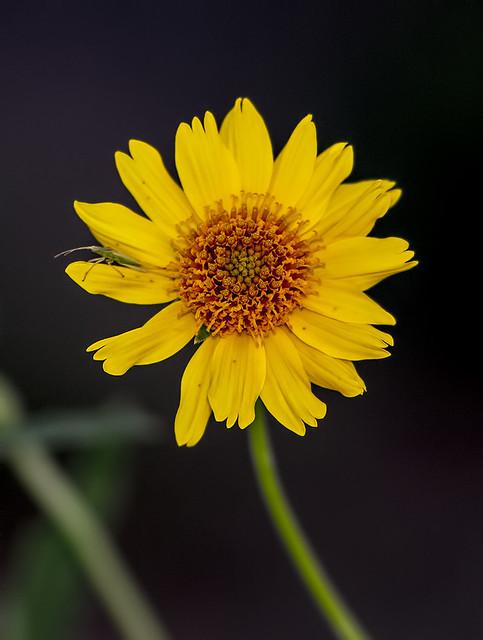 Wild Flower 7d_2147