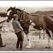 Bills Horse