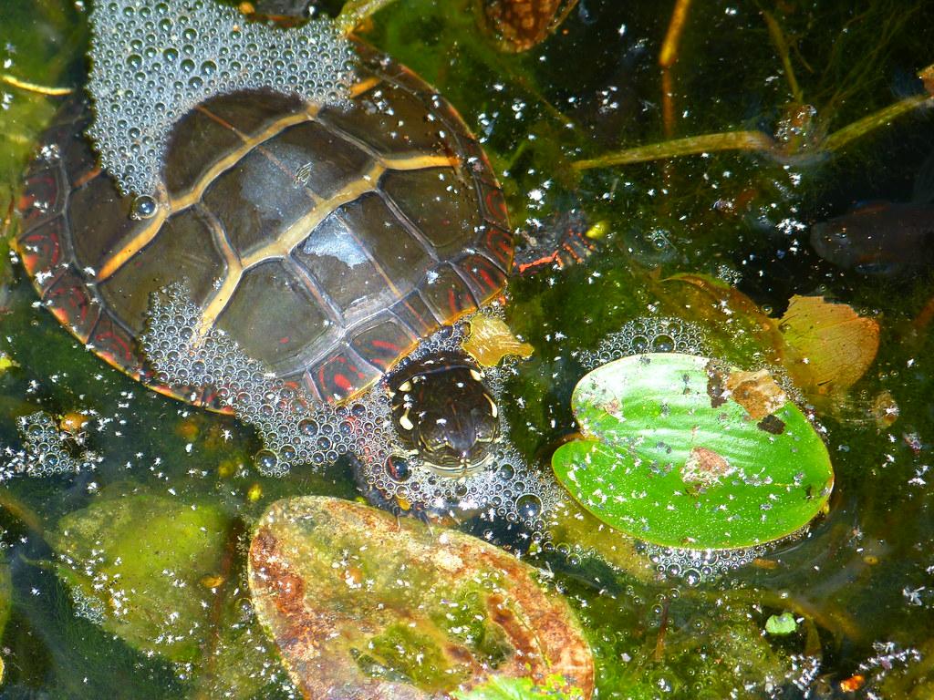 Mystic Aquarium Small Turtle Mystic Aquarium Mystic