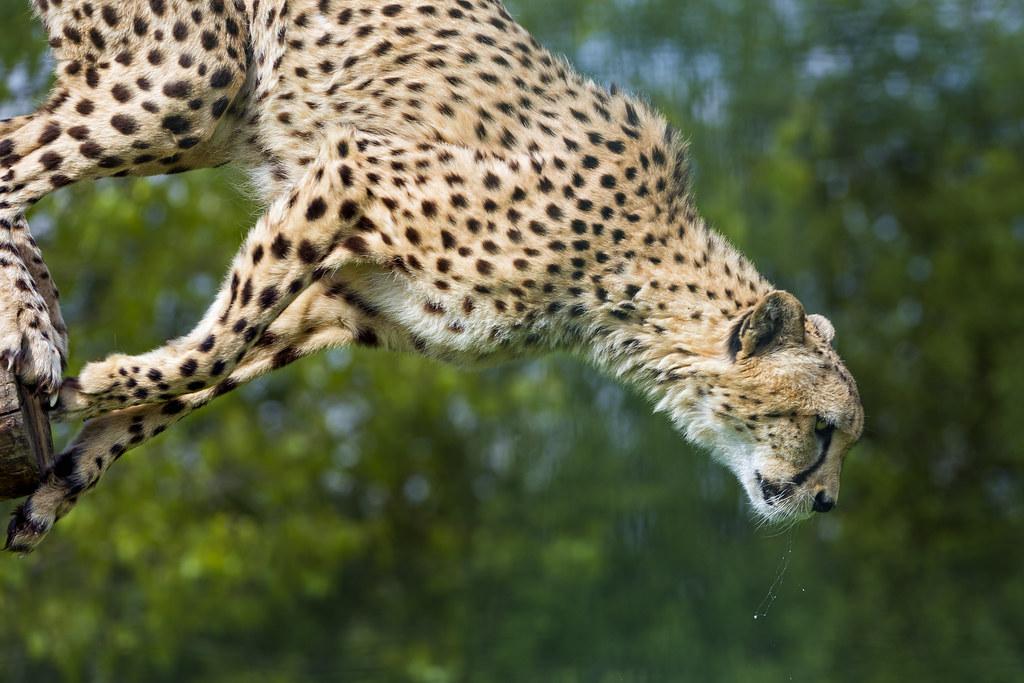 Murphy Jumping