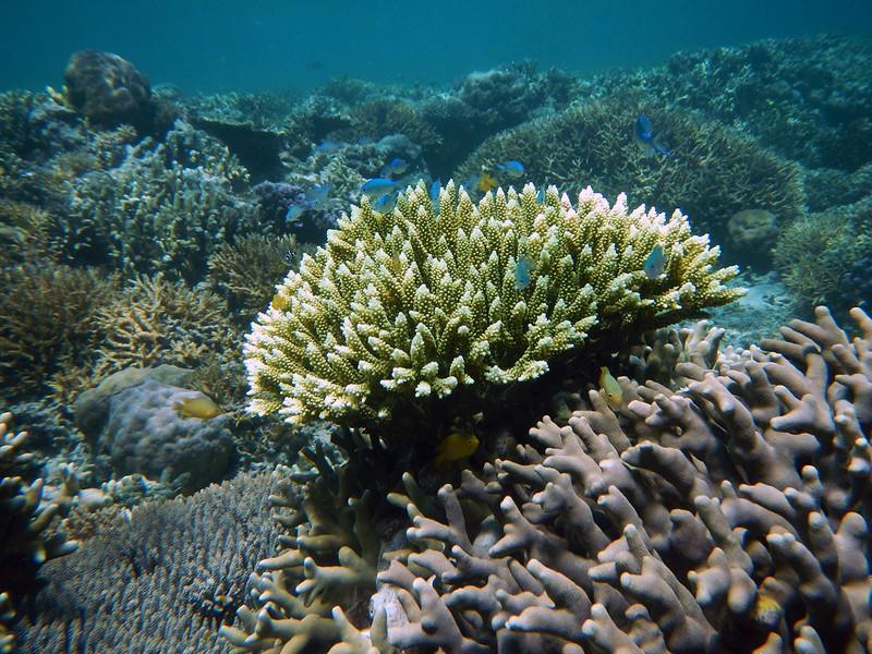 Warna-warni taman bawah laut Pulau Menjangan