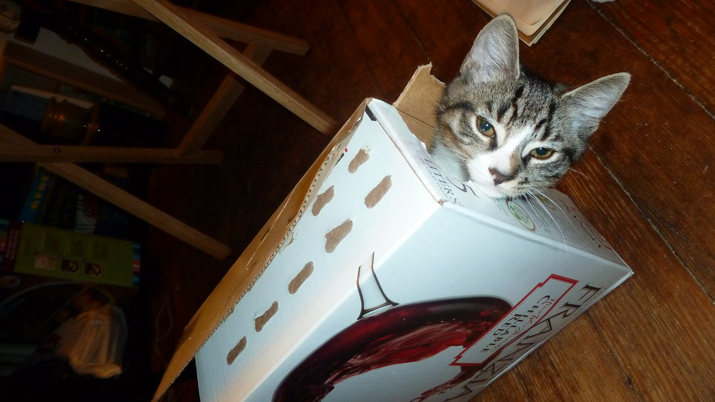 Bigfoot The Kitten In A Franzia Chillable Red Wine Box