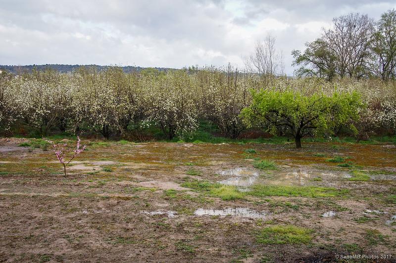 Campos del Mas de Francisco del Peixer