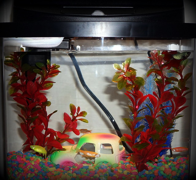 Betta fish aqueon betta bow 2 5 gallon acrylic aquarium for 2 gallon betta fish tank