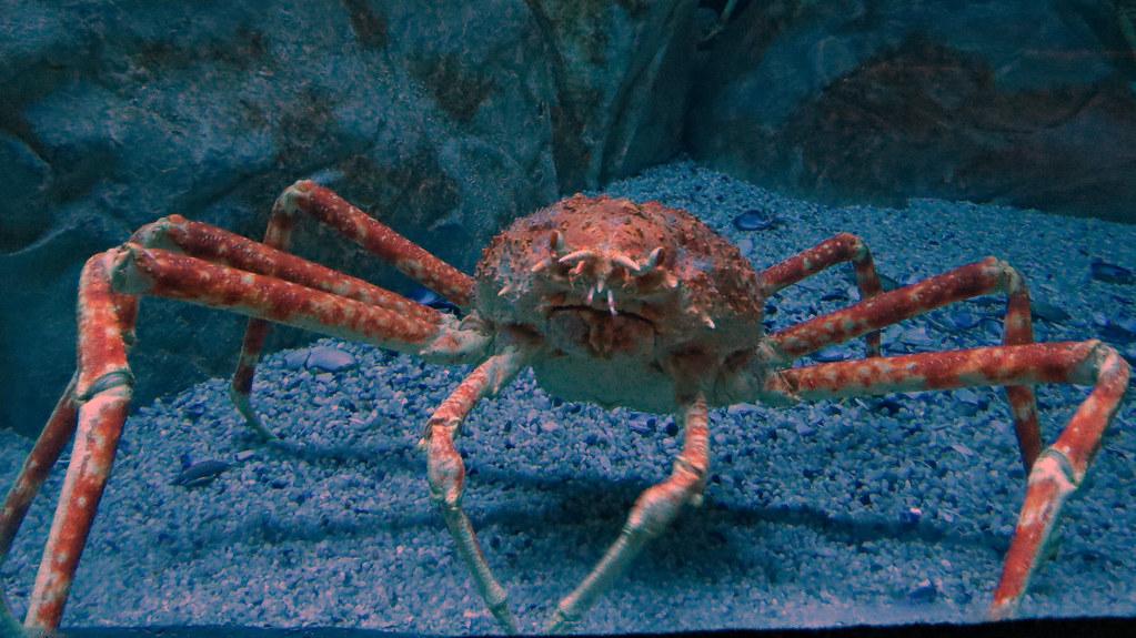 R Crabs Data Japanese spider crab ....