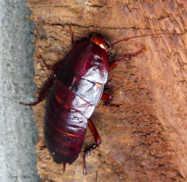 Roaches In Mobile Home
