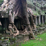 Preah Khan - Covered with Roots