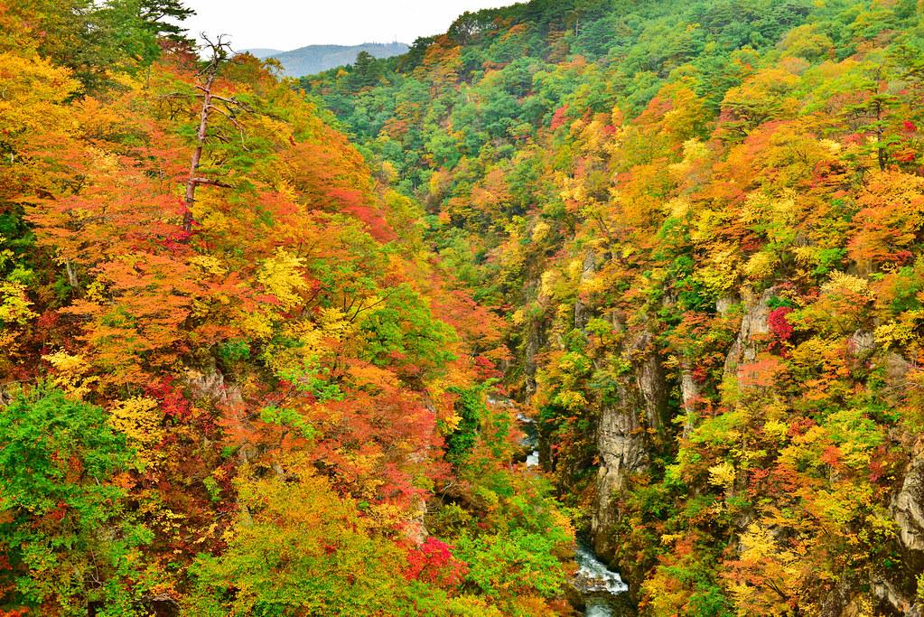 Осень гора деревья загрузить