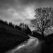 Last Stand (Winter Tree Silhouette), Lake District