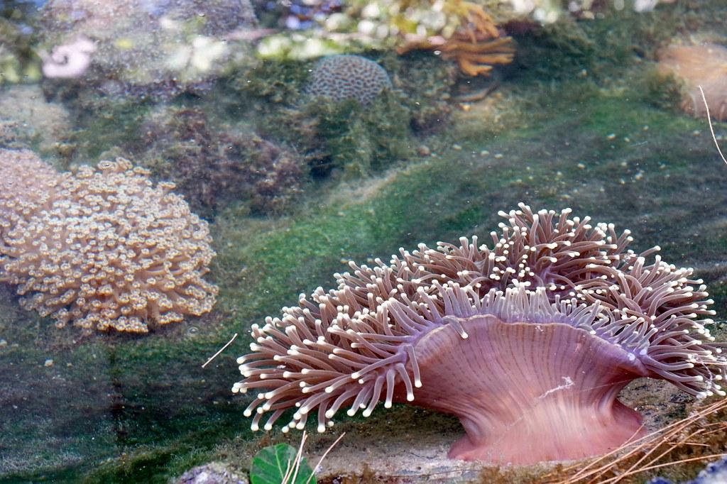 Andaman langkawi - coral nursery-020