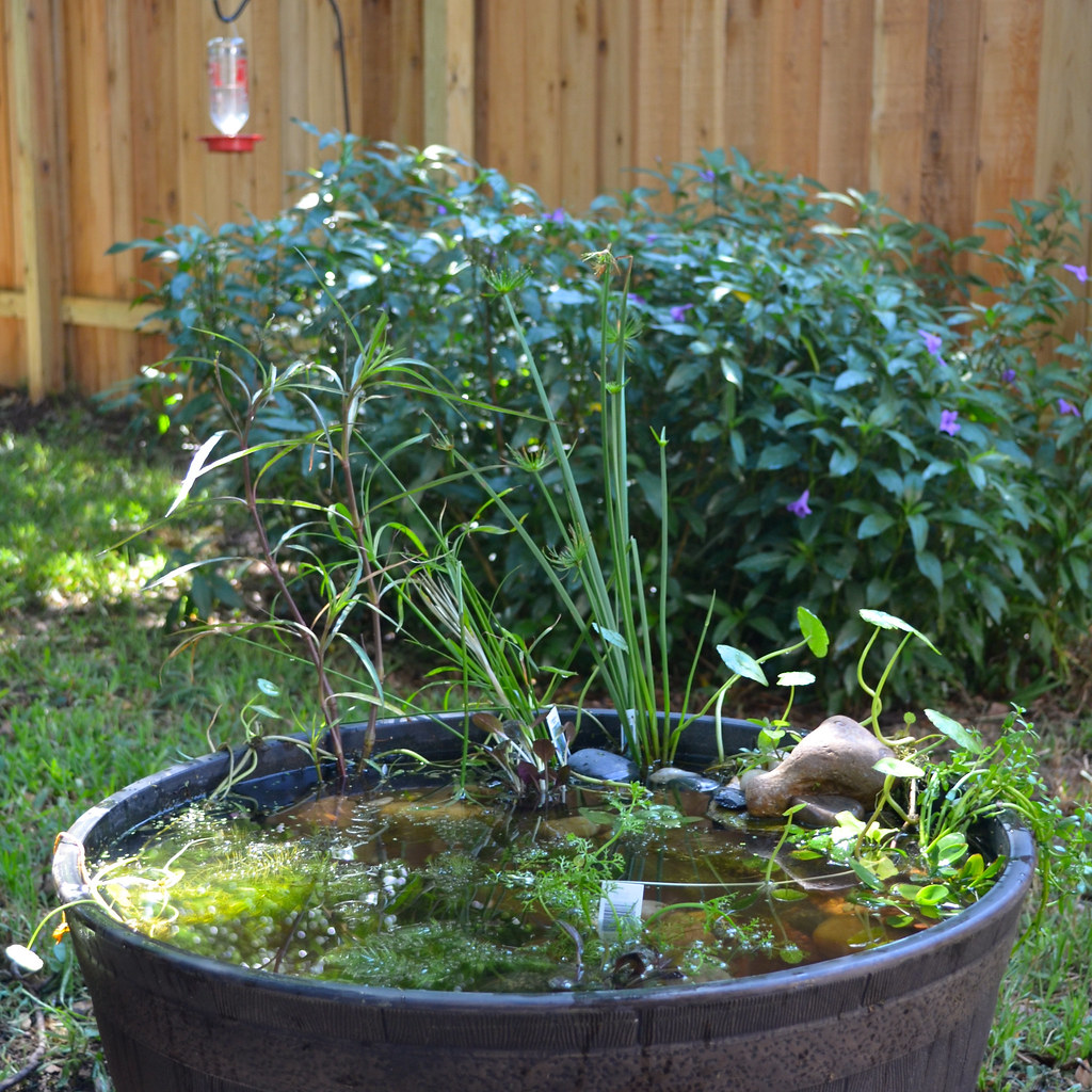 Whiskey Barrel Container Pond We Started A Whiskey