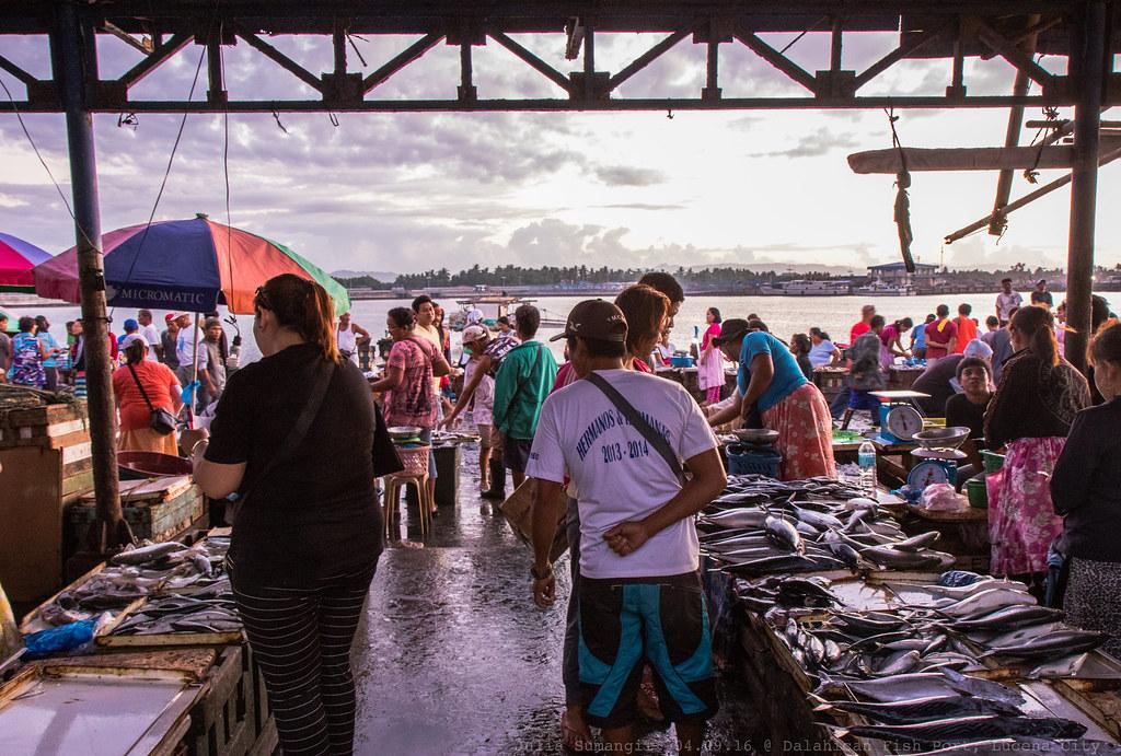 Dalahican fish port lucena city we left our hometown so for Koi pond quezon city