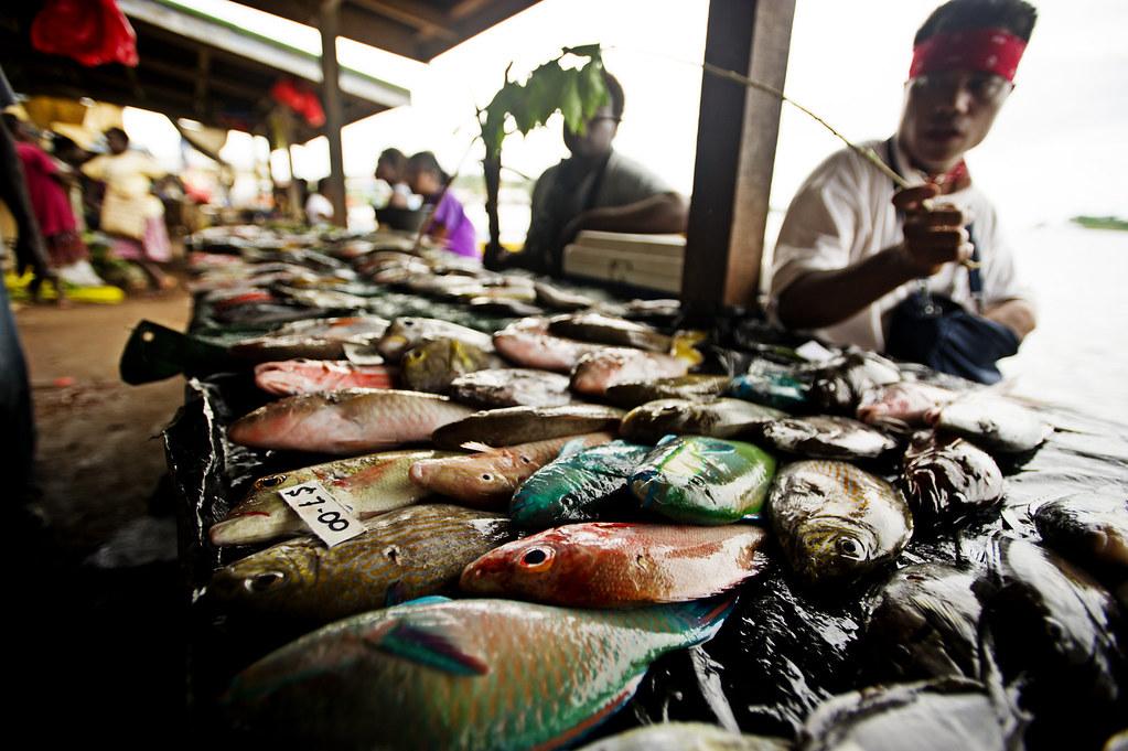 Gizo fish markets solomon islands fish market in gizo for White fish market