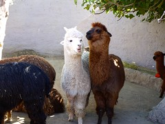 Visit Mundo Alpaca - Things to do in Arequipa