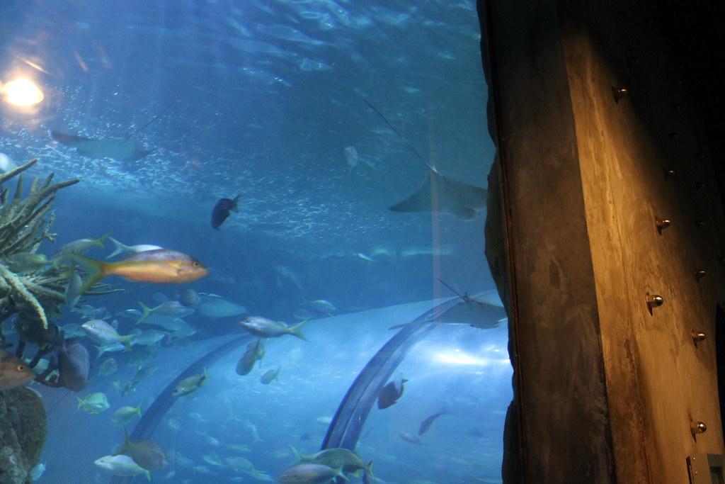 Visit To The Audubon Aquarium Of The Americas New Orleans