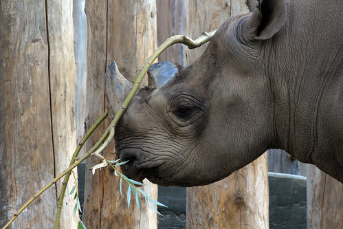 Black Rhino's Halloween Costume for Boo at the Zoo | by GollyGforce - Living My Worst Nightmare