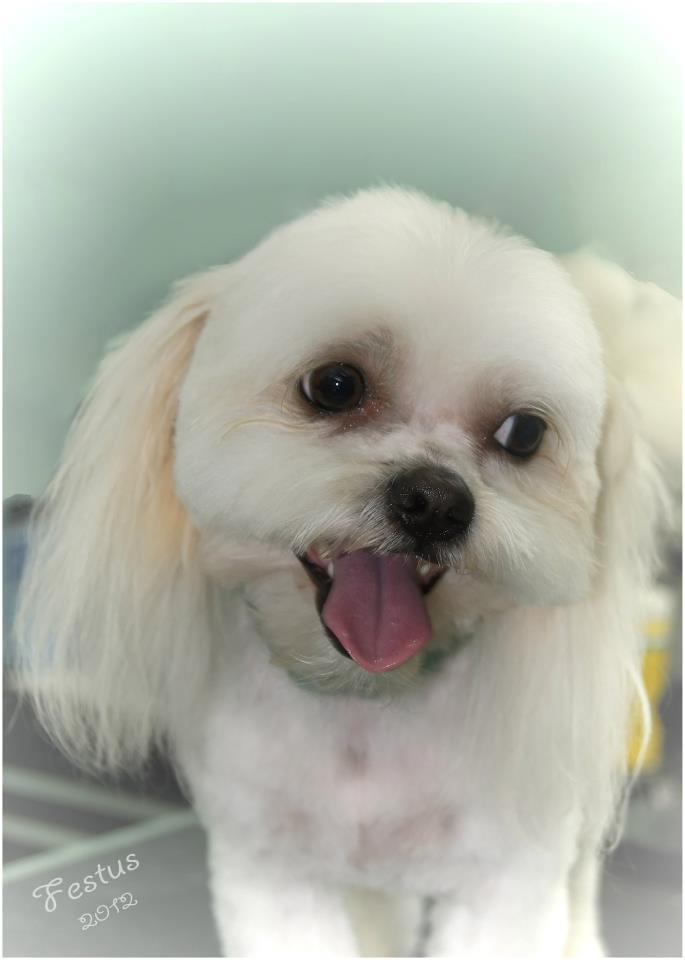 Best Pet Grooming Miami Beach