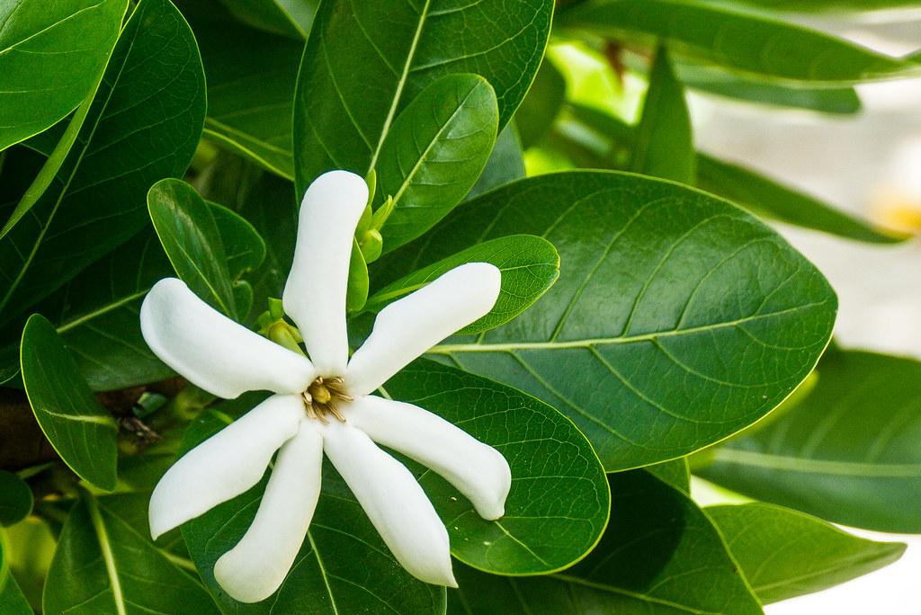 Cook Islands - Wikipedia