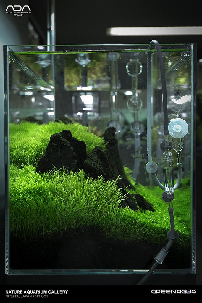 60p Aquarium With Utricularia And Micranthemum Sp Monte C