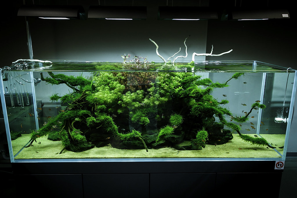 akwarium guardian, akwarium na zamówienie