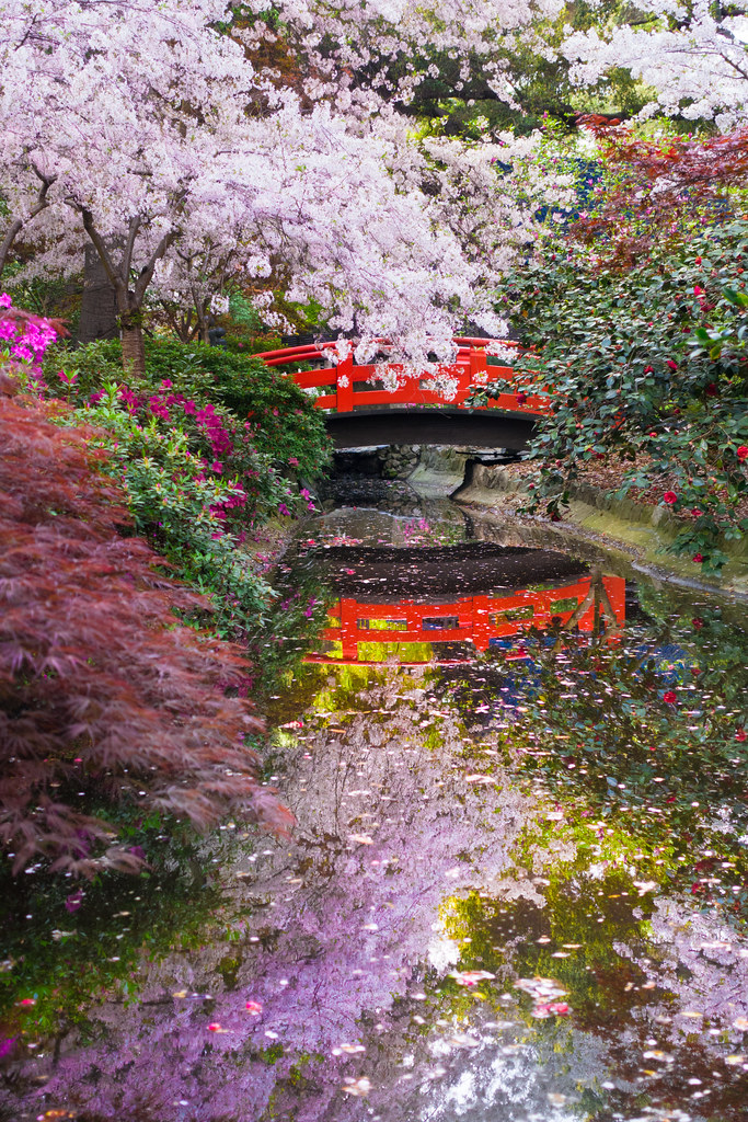 Cherry Blossoms In The Japanese Garden At Descanso Gardens