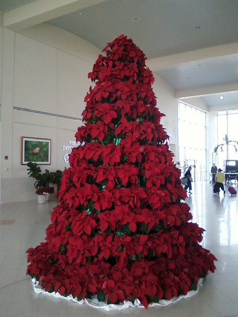 Poinsettias on a tree frame to form a christmas tree flickr for Poinsettia christmas tree frame