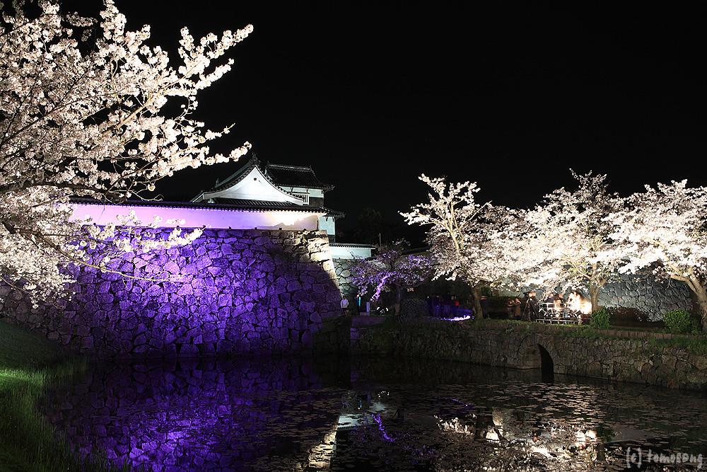 Sakura Festival 2014 at Night