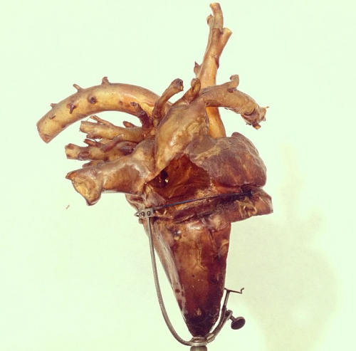 The heart of an unborn foal. The specimen is hollow and dry. It has been made by the Danish anatomist Ib Pedersen Ibsen (1801-1862).
