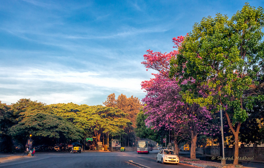 Bangalore Is The Most Beautiful City In India Right Now Folomojo