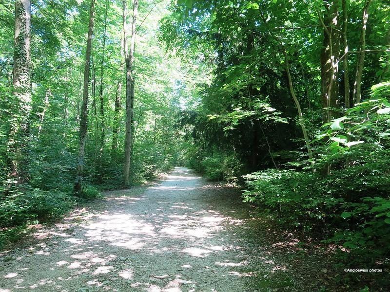 A Sunday afternoon walk through the Einsiedelei, Rüttenen