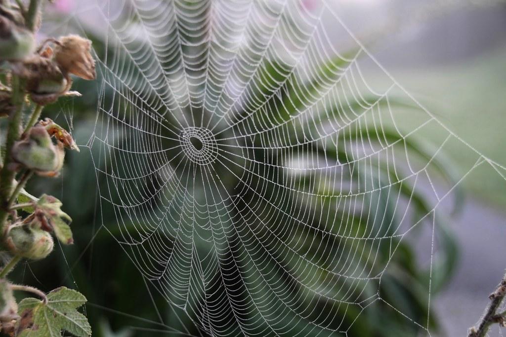 spider web toile d araign 233 e presqu 238 le de crozon bretagn jeanne menjoulet flickr