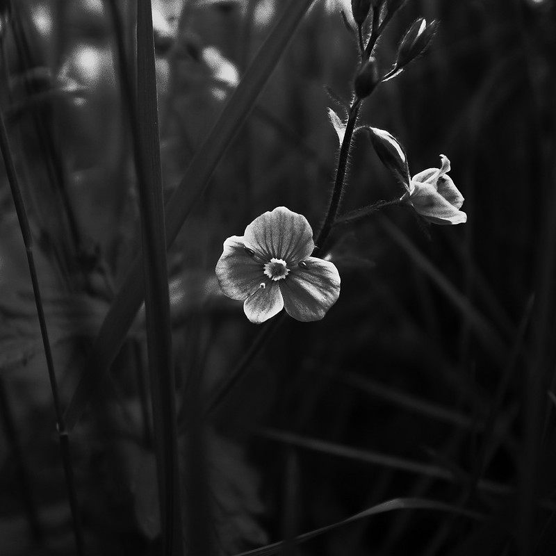 A small flower
