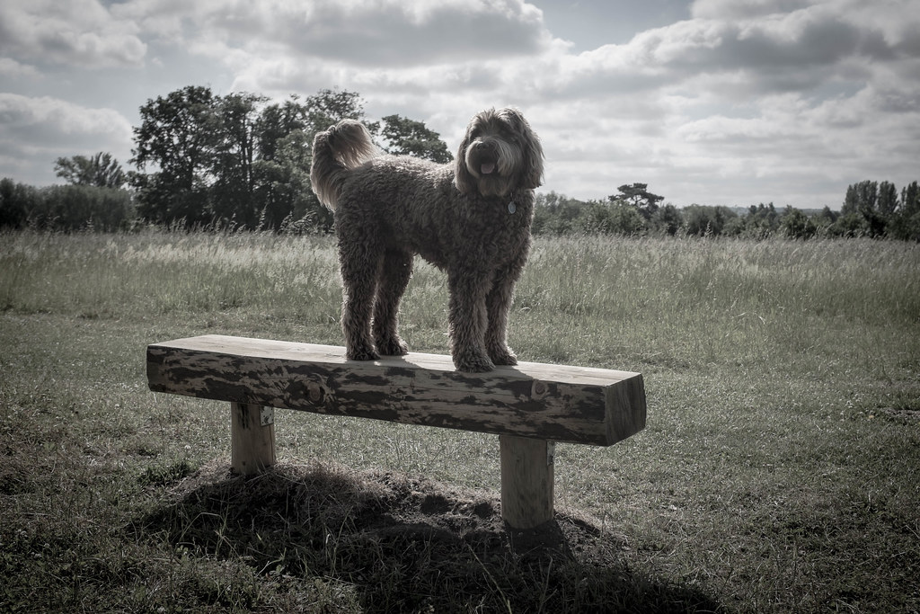 New bench at castle meadows