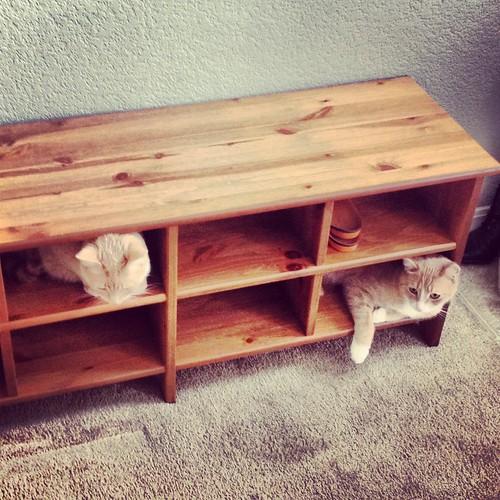 Cat Cubby