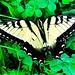Bye, Bye Butterfly