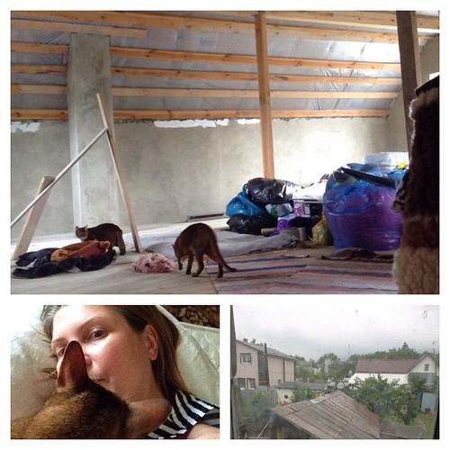 Обожаю дождь, потому что это официальная отмазка ничего не делать! В усадьбе сиеста, все спят, а мы с котами нежимся в необжитой мансарде и придумываем, как ее обустроить на зиму! Целых 60 метров для меня и котиков - это мечта! #старыйкрым  #abyssinian