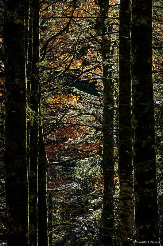 Luces y sombras que se cuelan entre los árboles