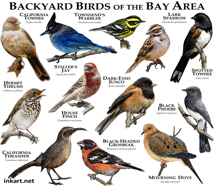 What Varities Of Birds Are Visiting Your Backyard: Some Of The Common Species Of