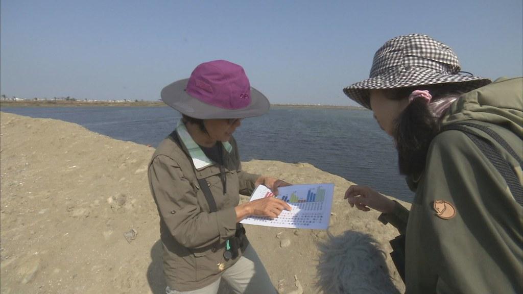 897-1-30 在地居民邱彩綢說,布袋的鷗科跟雁鴨科調查數量,占全台第一名。