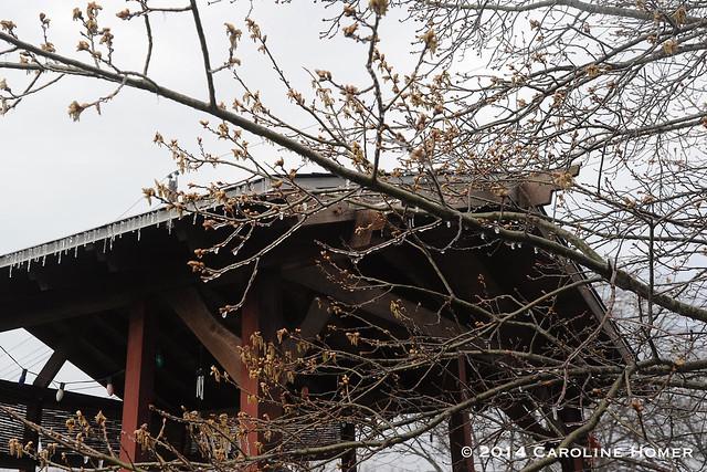 icy oak tree