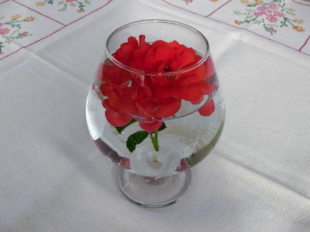 le pot aux roses une attention de ma soeur lou flickr