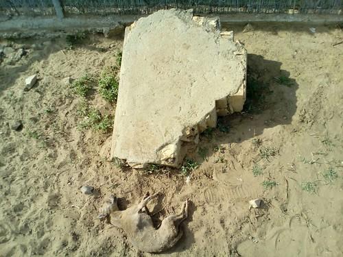 AionSur 33796254065_f9b454f7eb_d Tiran un perro por encima de la valla del refugio del Amparo y muere al golpearse con una piedra Asociaciones